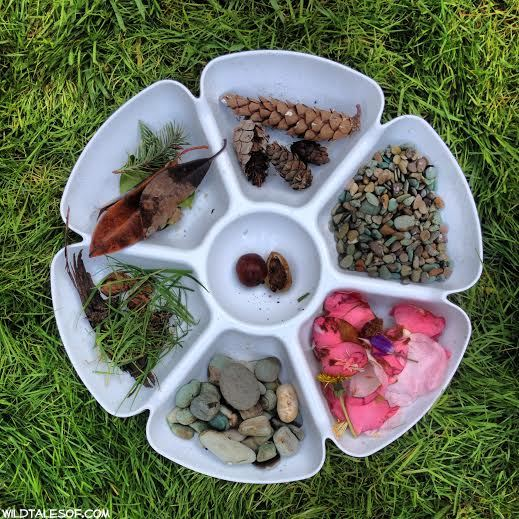 Collect and Sort: A Spring Nature Walk for Kids | WildTalesof.com