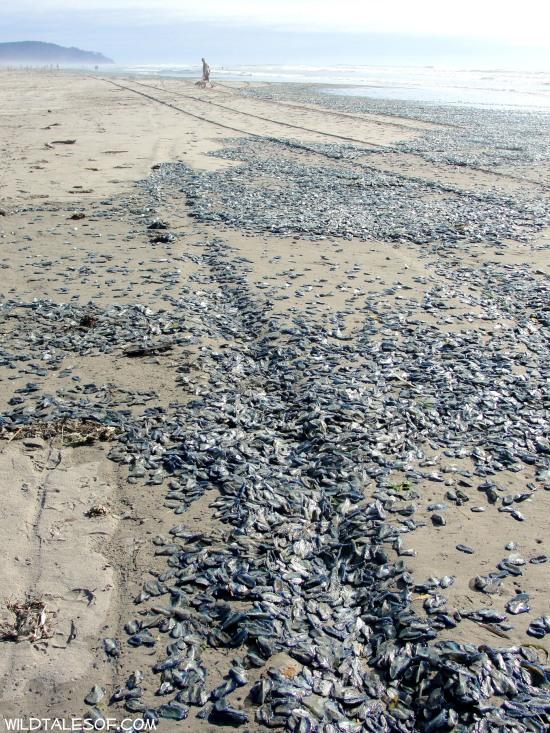 Long Beach, Washington: Peaceful, Simple Seashore Walk | WildTalesof.com