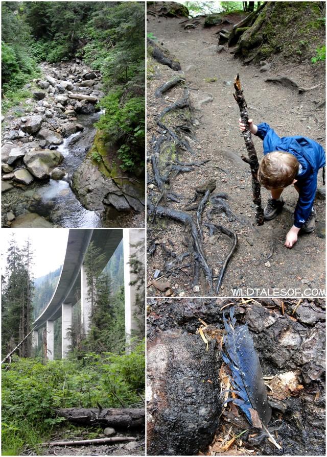 Catch-up Hikes: Denny Creek Water Slide Trail near WA's Snoqualmie Pass | WildTalesof.com