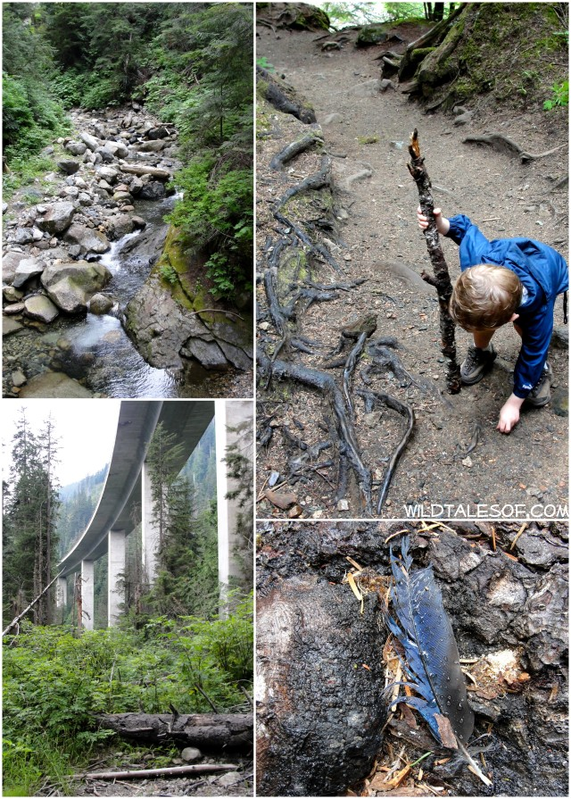 Catch-up Hikes: Denny Creek Water Slide Trail near WA's Snoqualmie Pass | WildTalesof.com