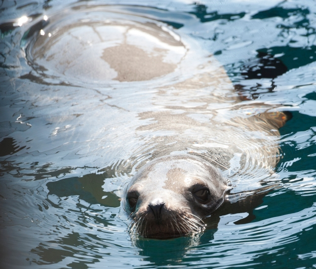 Dawn Day in the Wildlife: Volunteers Make the Difference at the Marine Mammal Center | WildTalesof.com