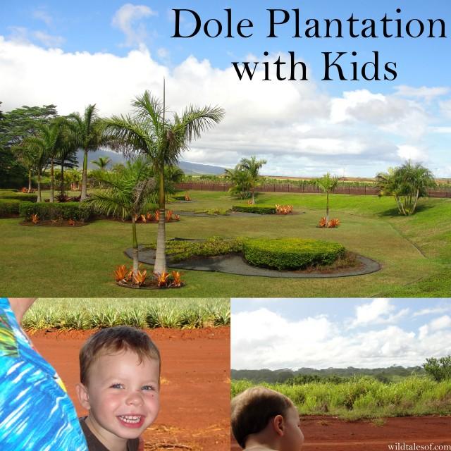 Dole Plantation with Kids | WildTalesof.com
