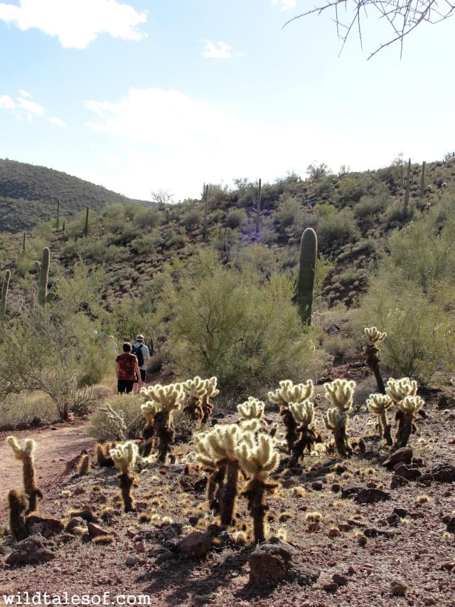 Lake Pleasant, Arizona | WildTalesof.com