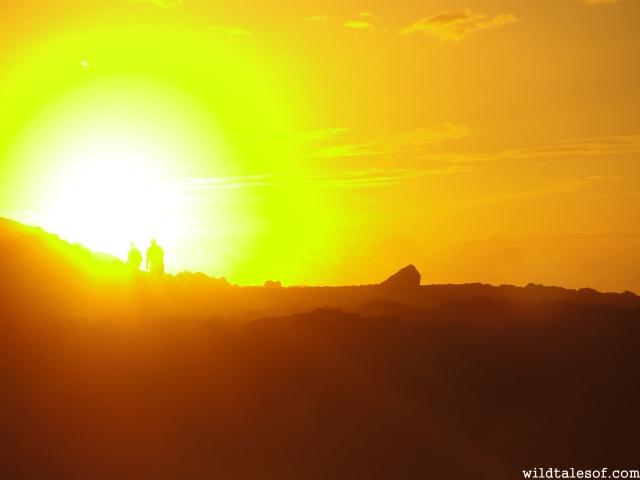 Oahu's Ka'ena Point State Park | WildTalesof.com