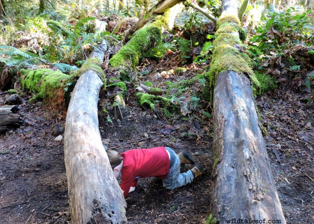 Preschool Hikes: Learning and Exploring at Squak Mountain State Park  | WildTalesof.com