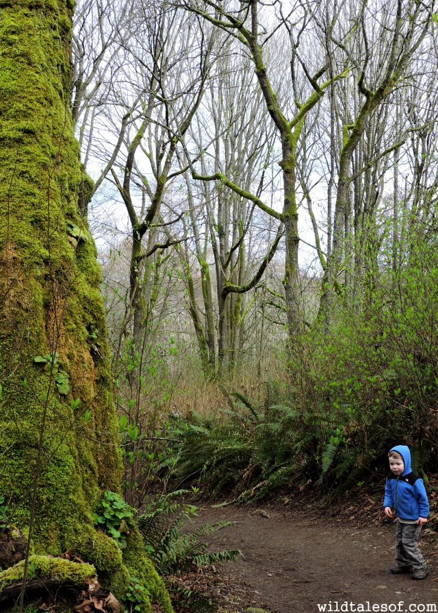 Discovery Park Loop Trail: Seattle, WA | WildTalesof.com