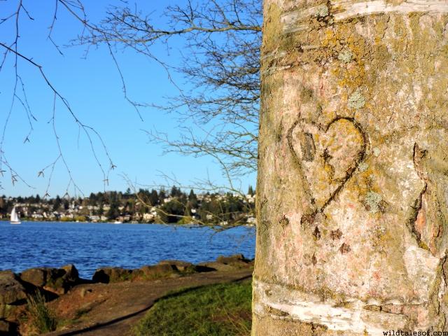 Treasure Walks and Early Spring in Seattle's Washington Park Arboretum | WildTalesof.com