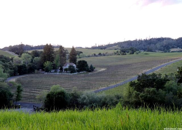 Geyserville, CA (Sonoma County) | WildTalesof.com