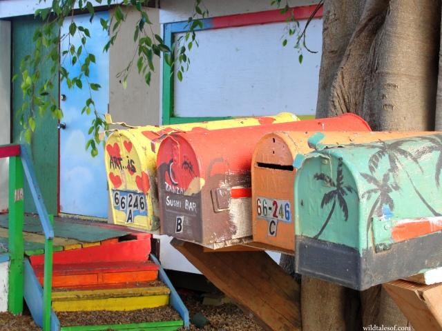 Chun's Reef: Tidepooling Fun on Oahu's North Shore   WildTalesof.com
