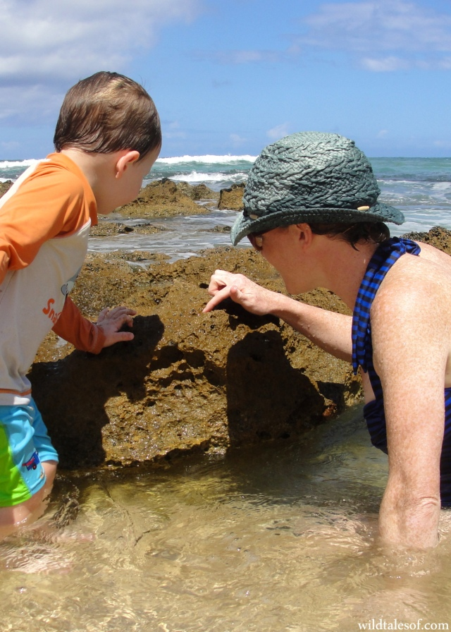 Chun's Reef: Tidepooling Fun on Oahu's North Shore | WildTalesof.com