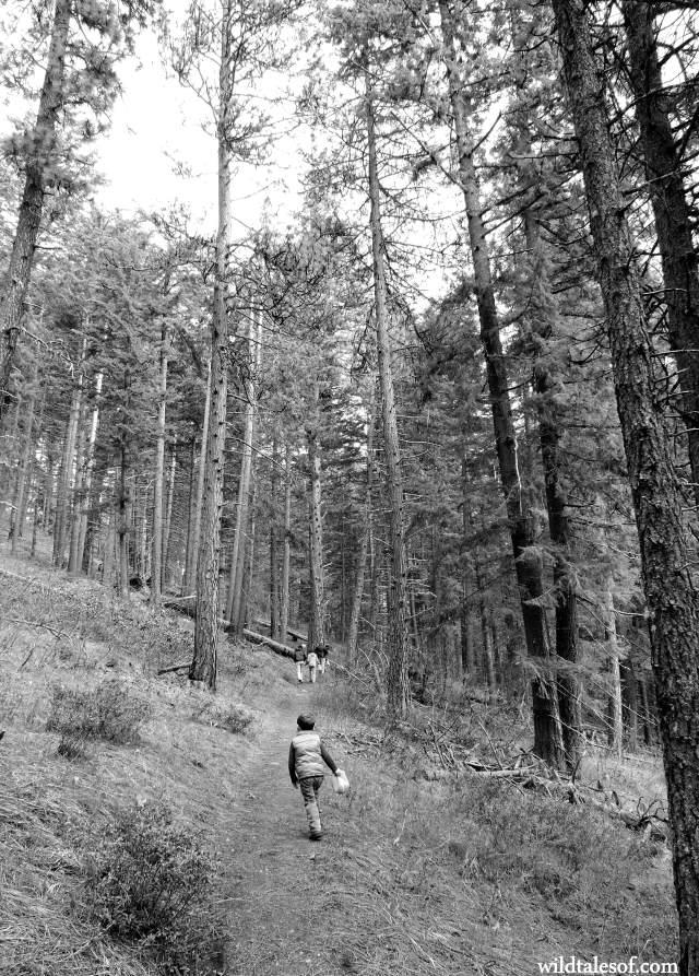 Dirty Face Trail--Lake Wenatchee, Washington | WildTalesof.com